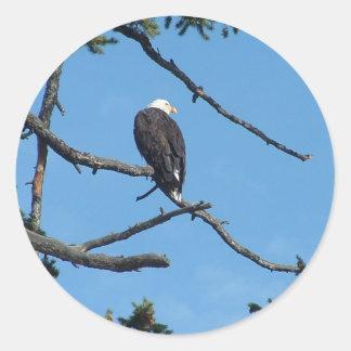 Pegatina de Eagle