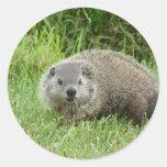 Pegatina de Groundhog