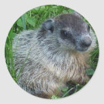 Pegatina de Groundhog del bebé