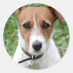 Pegatina de Jack Russell Terrier
