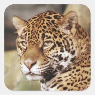 Pegatina de Jaguar