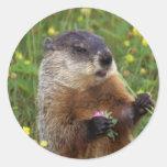 Pegatina de la actitud de Groundhog - más cerca