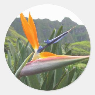 Pegatina de la ave del paraíso