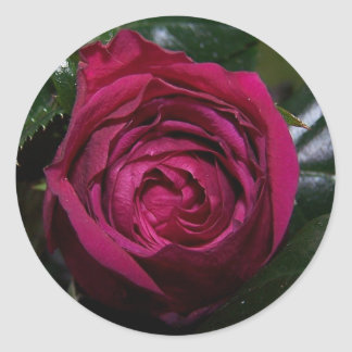 Pegatina de la belleza del capullo de rosa