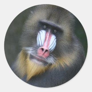 Pegatina de la cara del babuino