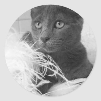 pegatina de la cara del gatito