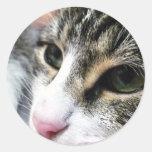 Pegatina de la cara del gato