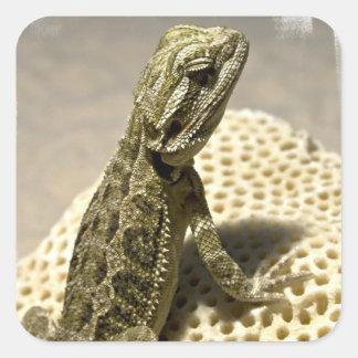 Pegatina de la especie del lagarto