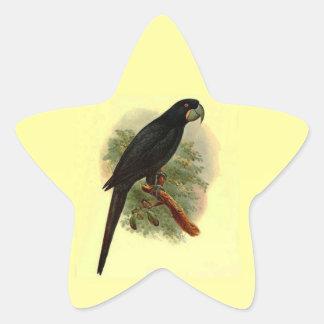 Pegatina de la estrella de Anadorhynchus
