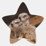 Pegatina de la estrella de Meerkat