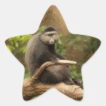 Pegatina de la estrella del mono