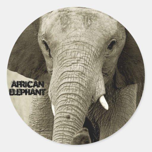 Pegatina de la fauna del elefante africano