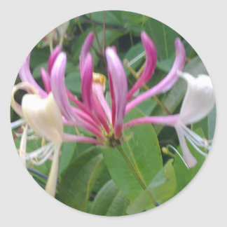 Pegatina de la flor de la madreselva