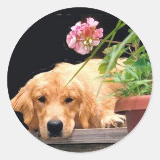 Pegatina de la flor del golden retriever