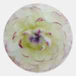 Pegatina de la flor del ranúnculo