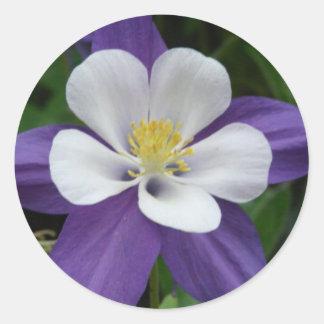 Pegatina de la flor púrpura y blanca de Columbine