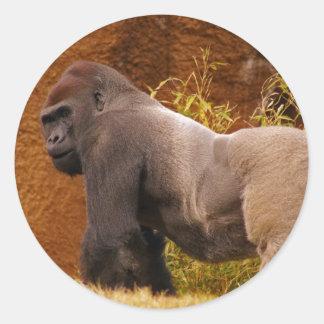 Pegatina de la foto del gorila del Silverback