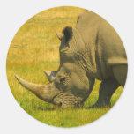 Pegatina de la foto del rinoceronte