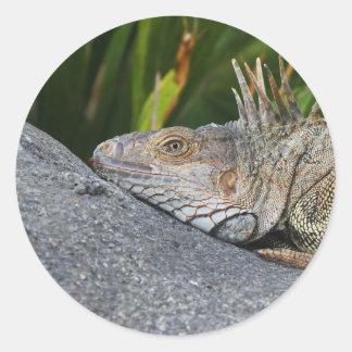 Pegatina de la iguana