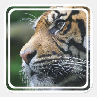 Pegatina de la imagen del tigre