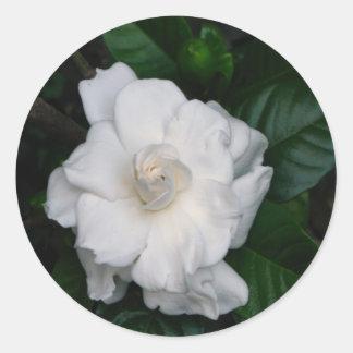 Pegatina de la impresión del Gardenia