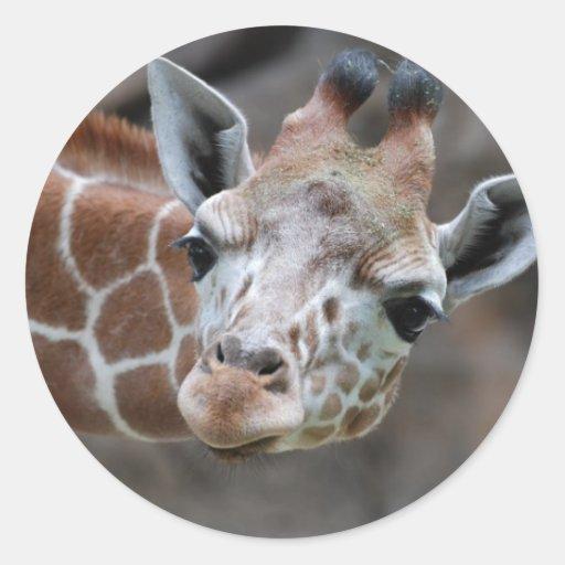 Pegatina de la jirafa