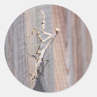 Pegatina de la mantis religiosa