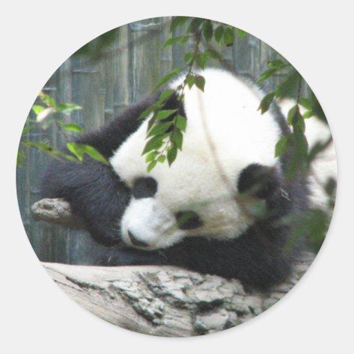 Pegatina de la panda gigante