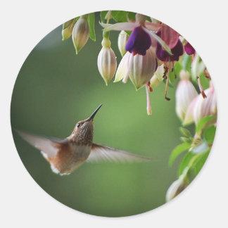 Pegatina de la planta del colibrí y de la flor de