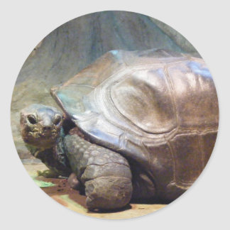 Pegatina de la tortuga gigante