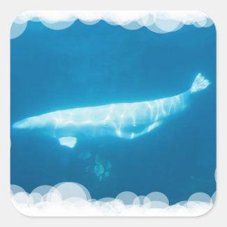 Pegatina de las ballenas de la beluga de la