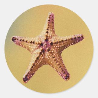 pegatina de las estrellas de mar