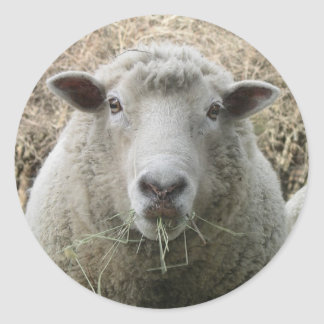 Pegatina de las ovejas del mascota