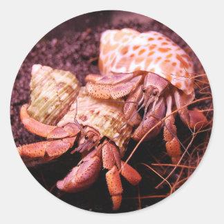 Pegatina de los cangrejos de ermitaño