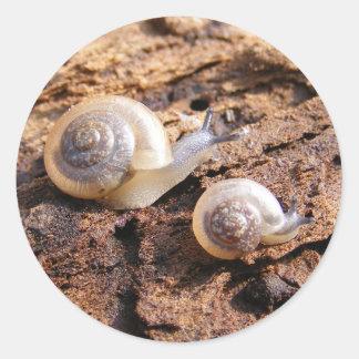 Pegatina de los caracoles de bebé