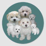 Pegatina de los perritos de Bichon Frise