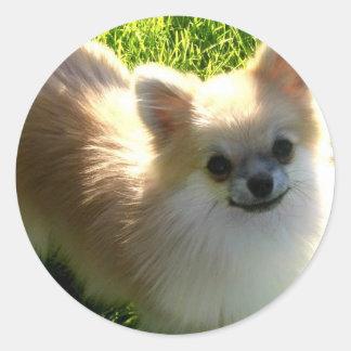 Pegatina de los perritos de Pomeranian