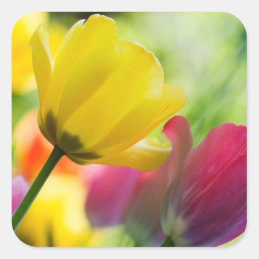 Pegatina de los tulipanes