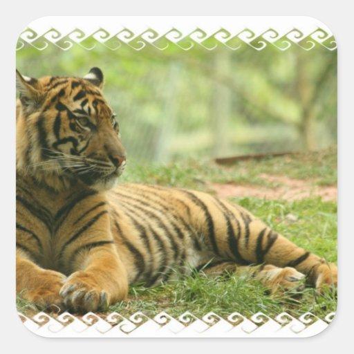 Pegatina de reclinación del tigre