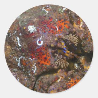 Pegatina de rey cangrejo de Puget Sound