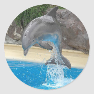 Pegatina de salto del delfín