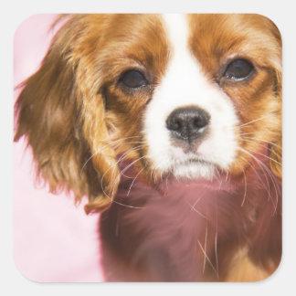 Pegatina de sexo femenino del cuadrado del perro