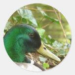 Pegatina de sexo masculino de Duck Head del pato