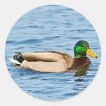 Pegatina de sexo masculino del pato del pato silve