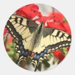 Pegatina de Swallowtail del anís