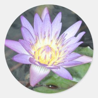 Pegatina de Waterlily