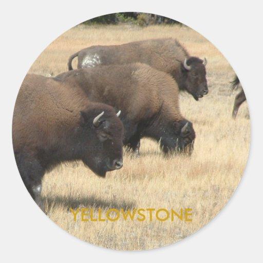 Pegatina de Yellowstone del búfalo