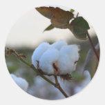 Pegatina del algodón