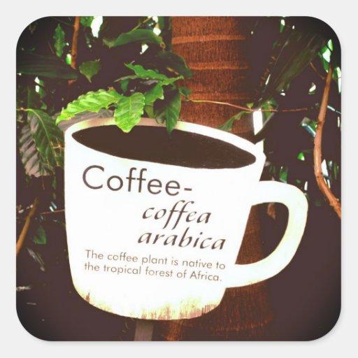 Pegatina del Arabica del café