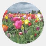 Pegatina del campo de los tulipanes